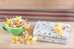 Χρωματισμένα φλυτζάνια με έναν τρύγο boxсand daffodils αναδρομικό στοκ εικόνες