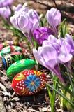 Χρωματισμένα χέρι αυγά Πάσχας και πορφυροί κρόκοι Στοκ Φωτογραφίες