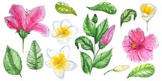 Χρωματισμένα χέρι τροπικά λουλούδια watercolor διανυσματική απεικόνιση
