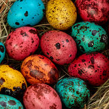 Χρωματισμένα χρωματισμένα αυγά Πάσχας ορτυκιών Στοκ φωτογραφίες με δικαίωμα ελεύθερης χρήσης