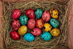 Χρωματισμένα χρωματισμένα αυγά Πάσχας ορτυκιών Στοκ Εικόνες