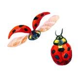 Χρωματισμένα Ladybug watercolors στο λευκό Στοκ Εικόνες