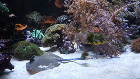 Χρωματισμένα waterworld ψάρια Στοκ Εικόνες