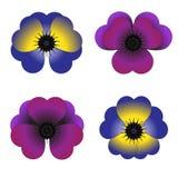 Χρωματισμένες βιολέτες με τα petels σε μια μορφή καρδιών διανυσματική απεικόνιση