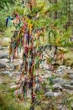 Χρωματισμένες κορδέλλες στο ιερό δέντρο Zalaal Κοντά στην πηγή μεταλλικού νερού Arshan Ρωσία Στοκ φωτογραφία με δικαίωμα ελεύθερης χρήσης