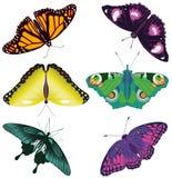 Χρωματισμένες πεταλούδες καθορισμένες Στοκ εικόνες με δικαίωμα ελεύθερης χρήσης