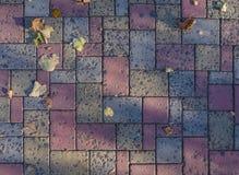 Χρωματισμένες πλάκες επίστρωσης με τα φύλλα φθινοπώρου και τις σκιές ήλιων στοκ εικόνες με δικαίωμα ελεύθερης χρήσης