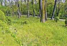 χρωματισμένες τουλίπες δέντρων πάρκων Στοκ φωτογραφίες με δικαίωμα ελεύθερης χρήσης