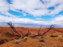 Χρωματισμένη έρημος στοκ εικόνα