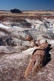 Χρωματισμένη έρημος Στοκ εικόνα με δικαίωμα ελεύθερης χρήσης