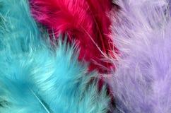 Χρωματισμένη ανασκόπηση φτερών Στοκ Εικόνες