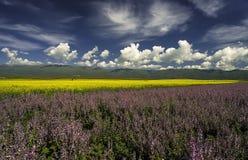 Χρωματισμένη γη Στοκ φωτογραφία με δικαίωμα ελεύθερης χρήσης