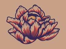 Χρωματισμένη διανυσματική απεικόνιση ενός λουλουδιού λωτού απεικόνιση αποθεμάτων