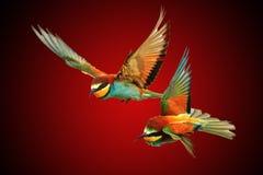 χρωματισμένη ζευγάρι έννοια πουλιών για Valentine& x27 ημέρα του s Στοκ Φωτογραφίες