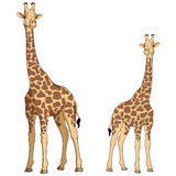 Χρωματισμένη διανυσματική απεικόνιση giraffe Απομονωμένα αντικείμενα Στοκ φωτογραφία με δικαίωμα ελεύθερης χρήσης