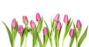 χρωματισμένη κρητιδογραφία λουλουδιών Στοκ Εικόνα