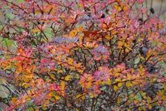 Χρωματισμένη περίληψη τέχνη φθινοπώρου στοκ εικόνα
