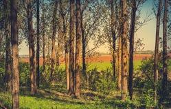 Χρωματισμένη τρύγος φωτογραφία της δασικής λεπτομέρειας Στοκ φωτογραφίες με δικαίωμα ελεύθερης χρήσης