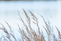 χρωματισμένη φθινόπωρο χλόη στην ακτή της λίμνης Στοκ φωτογραφίες με δικαίωμα ελεύθερης χρήσης