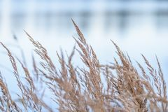 χρωματισμένη φθινόπωρο χλόη στην ακτή της λίμνης Στοκ Εικόνες