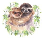 Χρωματισμένη χέρι απεικόνιση ζώων watercolor Χαριτωμένες νωθρότητες χαμόγελου ζευγών διανυσματική απεικόνιση