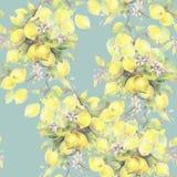 Χρωματισμένη χέρι απεικόνιση watercolor άνευ ραφής σχέδιο με τα στοιχεία κλάδων δέντρων λεμονιών διανυσματική απεικόνιση