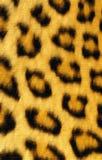 χρωματισμένη leopard τυπωμένη ύλη χ& Στοκ φωτογραφία με δικαίωμα ελεύθερης χρήσης