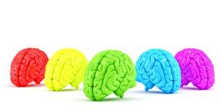 Χρωματισμένοι ανθρώπινοι εγκέφαλοι έννοια δημιουργική απομονωμένος Περιέχει το μονοπάτι ψαλιδίσματος Στοκ Εικόνες