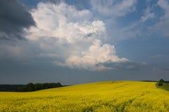 Χρωματισμένος κίτρινος ανθίζοντας τομέας Θερινό τοπίο με τα σύννεφα θύελλας Στοκ φωτογραφία με δικαίωμα ελεύθερης χρήσης