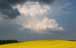 Χρωματισμένος κίτρινος ανθίζοντας τομέας Θερινό τοπίο με τα σύννεφα θύελλας Στοκ Εικόνες