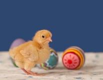 χρωματισμένος νεοσσός χρυσός αυγών Πάσχας Στοκ εικόνες με δικαίωμα ελεύθερης χρήσης