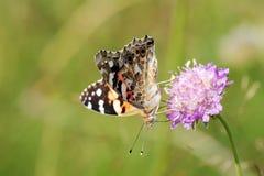 Χρωματισμένος την κυρία Butterfly στοκ φωτογραφίες