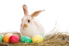 χρωματισμένος bunny σανός αυγών Πάσχας Στοκ Εικόνες