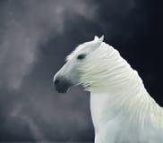 Χρωματισμένο άσπρο άλογο απεικόνιση αποθεμάτων