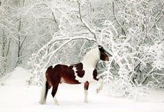 Χρωματισμένο άλογο που τρέχει στα χιονισμένα ξύλα Στοκ Φωτογραφία