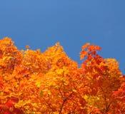 Χρωματισμένο δέντρο leves Στοκ εικόνες με δικαίωμα ελεύθερης χρήσης