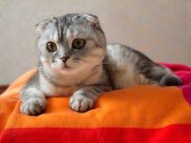 χρωματισμένο γάτα να βρεθεί coverlet Στοκ Εικόνες