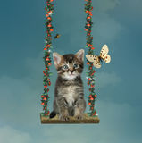 Χρωματισμένο γατάκι σε μια αιώρα απεικόνιση αποθεμάτων