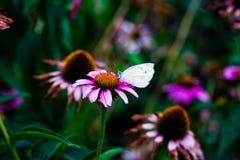 χρωματισμένο καλοκαίρι φύσης χεριών γίνοντα απεικόνιση Στοκ εικόνα με δικαίωμα ελεύθερης χρήσης