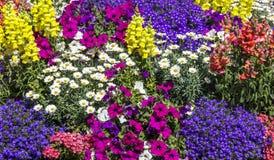 χρωματισμένο κρεβάτι λουλουδιών στοκ φωτογραφίες με δικαίωμα ελεύθερης χρήσης