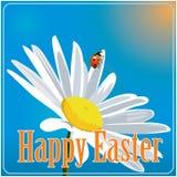 Χρωματισμένο Πάσχα υπόβαθρο με camomile και τη λαμπρίτσα Στοκ φωτογραφία με δικαίωμα ελεύθερης χρήσης