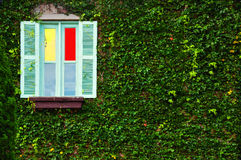Χρωματισμένο παράθυρο που καλύπτεται από τα πράσινα φύλλα Στοκ Εικόνες
