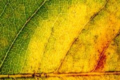 Χρωματισμένο φύλλο textre Στοκ Φωτογραφίες