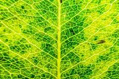 Χρωματισμένο φύλλο textre Στοκ εικόνα με δικαίωμα ελεύθερης χρήσης