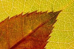 Χρωματισμένο φύλλο textre Στοκ εικόνες με δικαίωμα ελεύθερης χρήσης