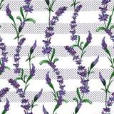 Χρωματισμένο χέρι άνευ ραφής σχέδιο watercolor των λουλουδιών άνοιξη απεικόνιση αποθεμάτων