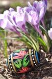 Χρωματισμένο χέρι αυγό Πάσχας και πορφυροί κρόκοι Στοκ Φωτογραφίες
