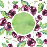 Χρωματισμένο χέρι πλαίσιο κερασιών Εκλεκτής ποιότητας θερινό υπόβαθρο Watercolor Αρχική συρμένη χέρι απεικόνιση Στοκ Εικόνες