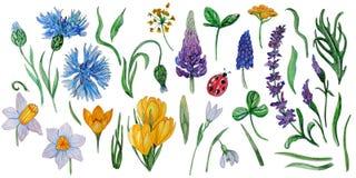 Χρωματισμένο χέρι σύνολο watercolor λουλουδιών άνοιξη διανυσματική απεικόνιση