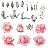 Χρωματισμένο χέρι σύνολο watercolor λουλουδιών που απομονώνεται στο άσπρο υπόβαθρο διανυσματική απεικόνιση